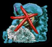 Рок морская звезда