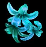 Сюрприз Цветы