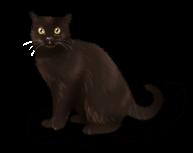 Кошачья ведьма