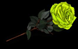 Rose Pianist