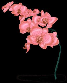 Снежный цветок