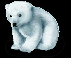 Медвежья фея зимы