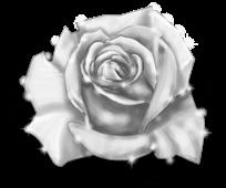 Гигантская роза зимняя фея