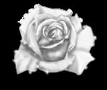 Розовая фея зимы