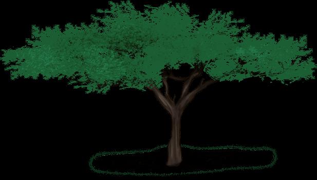 Лев дерево