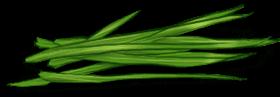 Мягкая трава
