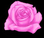 маленький розовый день святого валентина