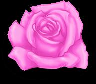 большая роза день святого валентина