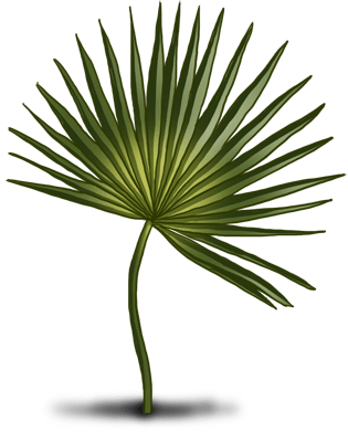 Таити Палм
