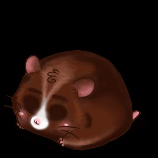 Принять хомяк Choco