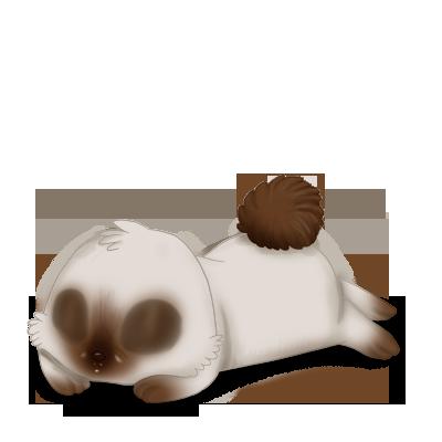 Принять кролик сиамский