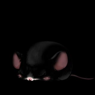 Принять мышь черный