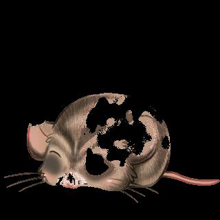 Принять мышь Flunsh