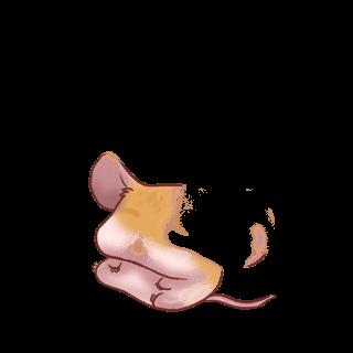Принять мышь альбинос