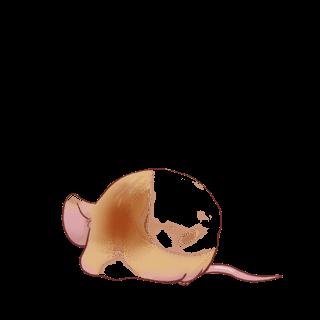 Принять мышь домашнее хозяйство