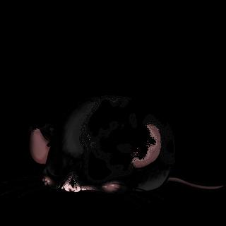 Принять мышь ангора